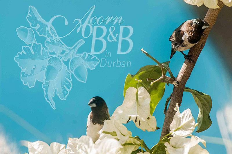 Acorn Bed & Breakfast in Durban - Berea, Durban Accommodation