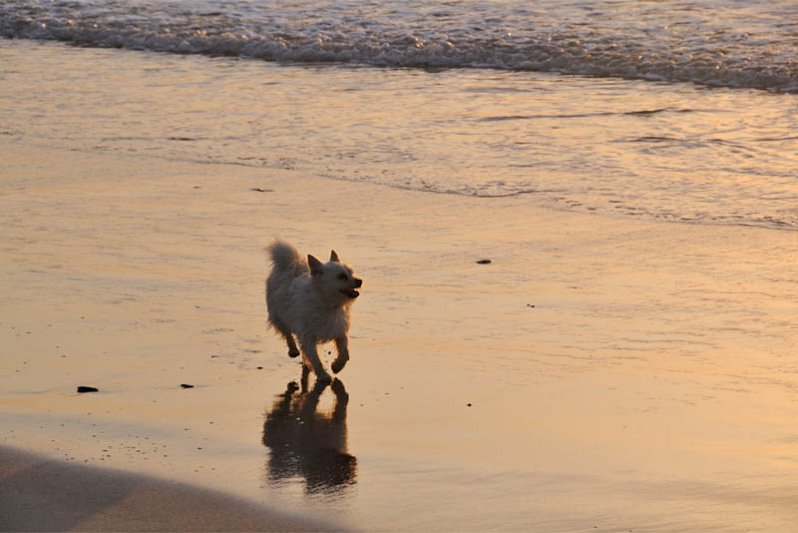 Picture of a dog on the beach in front of Die Visserhuisie
