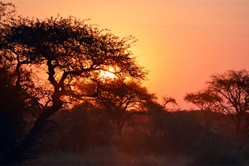 1/16 - Kalahari bushveld sunset