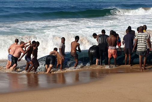 1/31 - June / July - Sardine Fever. Fishermen are netting sardines