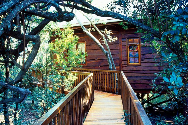 Tree Frog Forest Cabin - rear