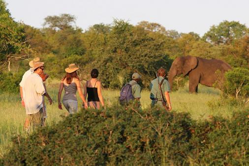 1/18 - Plains Camp (home of Rhino Walking Safaris) Guided Safari Walks