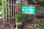 Dlinza Forest Accommodation