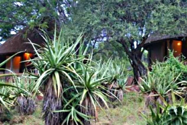 1/22 - Olifants Restcamp Bungalows - Kruger National Park, Mpumalanga
