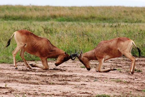 1/11 - Orpen Restcamp - Kruger National Park, Mpumalanga