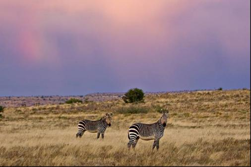 1/16 - Pretoriuskop Restcamp - Kruger National Park, Mpumalanga