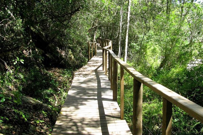 The hiking trails in the Wilderness forests are popular amoungst tourists
