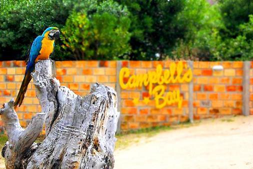 1/20 - Campbells Bay Resort