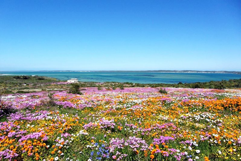 West Coast Flowers in Spring
