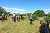 Ngibela Adventure Horse Trails