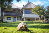 Winelands Villa Guesthouse