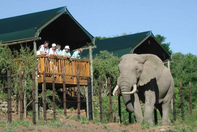 Addo Rest Camp Addo Accommodation Addo Game Reserve And Bush Lodge Accommodation