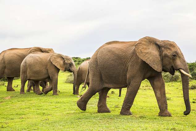 1/19 - Game Reserve accommodation in Addo Elephant National Park