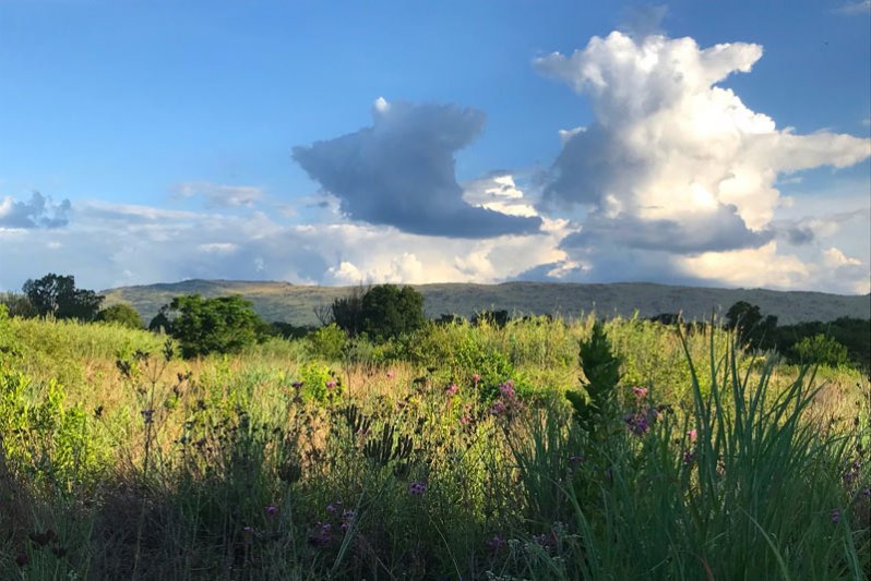 View of the fields & Magalies mountain