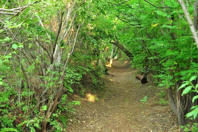 Walk/ cycling path on the property.(12 km)