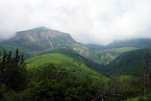 View of Magoebaskloof Adventures Accommodation