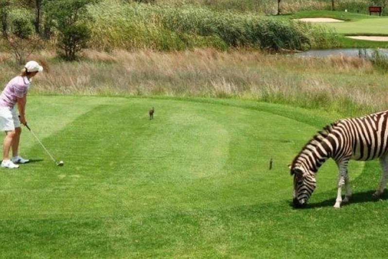 Best golf experience ever... in this wildlife reserve..