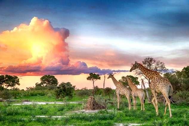 1/25 - Okavango Delta Game Reserve And Bush Lodge Accommodation