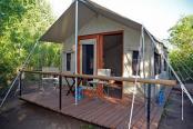 Wild Olive Tree Camp